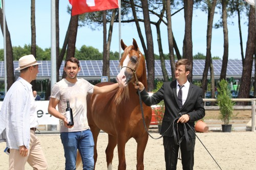2017 Bordeaux Arabian Masters - photo by Lena Awad
