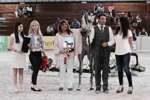 2017 Wels Arabian Horse Show
