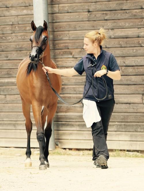 2017 Arabians Horse Festival Alsace Grand Est - photo by Millington Andersen