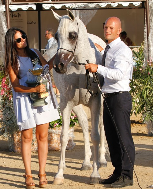 2017 Mediterranean and Arab Countries Arabian Horse Championship - Shirin By Aisha - photo Claire Reignaud