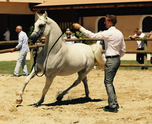 2017 Open Day Haras de Montpezat - photo by Millington Andersen