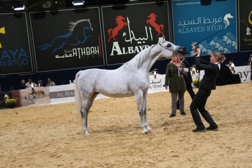 2017 German National Arabian Horse Championship - photo Jan Kan - Sorella El Hadiyah