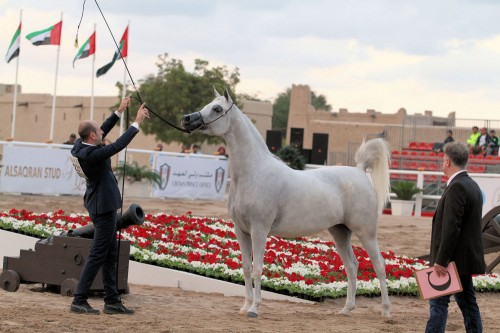 2017 Fujairah Arabian Horse Show - photo by Eric Blaak