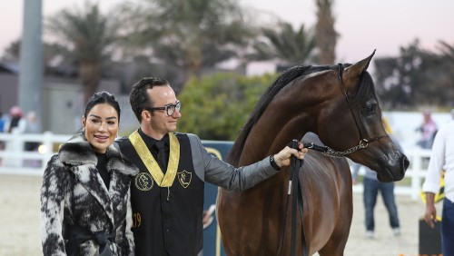 2018 Kuwait 5th Arabian Horse Breeders Show - photo by Michael Steurs