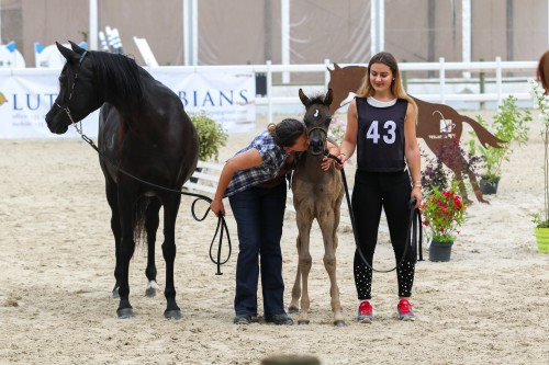 Arabians Horse Festival Alsace Grand Est - photo by Britt Monten