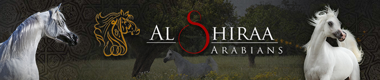 Al Shiraa Stables