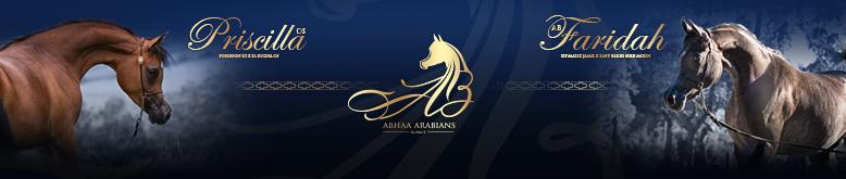 abhaa Arabians