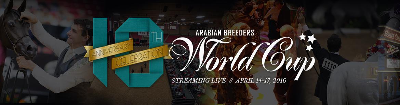 219 Dr Cool Arabian Breeders World Cup