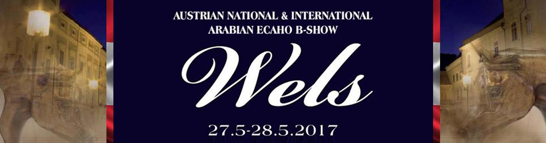 Wels - Austrian National & International Arabian ECAHO B- show