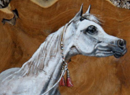 Arabian Horse Weekend - National C Show