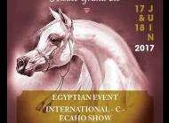 Arabians Horse Festival Alsace Grand Est