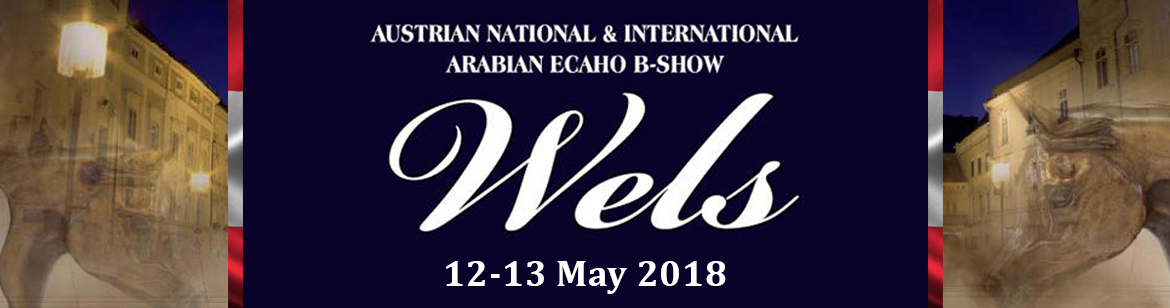 Wels - Austrian National & International Arabian ECAHO B- show