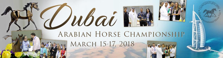 Dubai - International Arabian Horse Championship