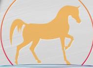 Jeddah Arabian Horse Show